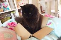 KitKat in a Box